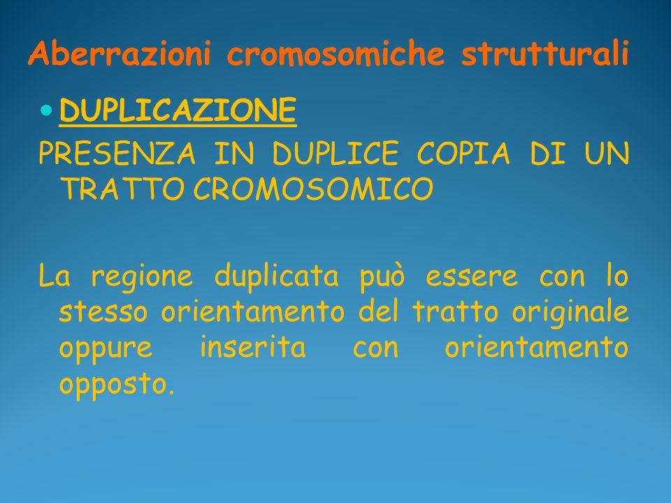 Aberrazioni cromosomiche strutturali DUPLICAZIONE PRESENZA IN DUPLICE COPIA DI UN TRATTO CROMOSOMICO La regione duplicata può essere con lo stesso ori