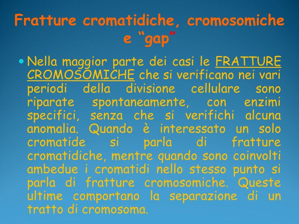 Fratture cromatidiche, cromosomiche e gap Nella maggior parte dei casi le FRATTURE CROMOSOMICHE che si verificano nei vari periodi della divisione cel