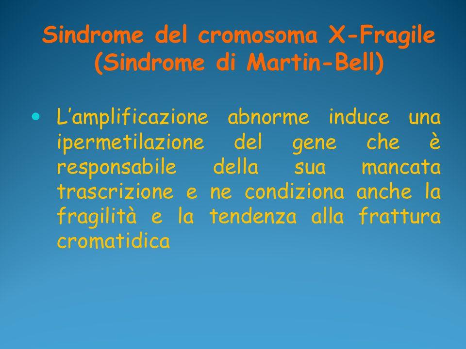 Sindrome del cromosoma X-Fragile (Sindrome di Martin-Bell) Lamplificazione abnorme induce una ipermetilazione del gene che è responsabile della sua ma