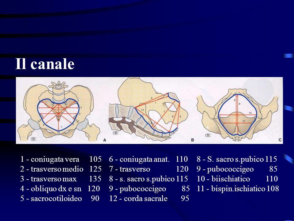 1 - coniugata vera 105 2 - trasverso medio 125 3 - trasverso max 135 4 - obliquo dx e sn 120 5 - sacrocotiloideo 90 6 - coniugata anat. 110 7 - trasve