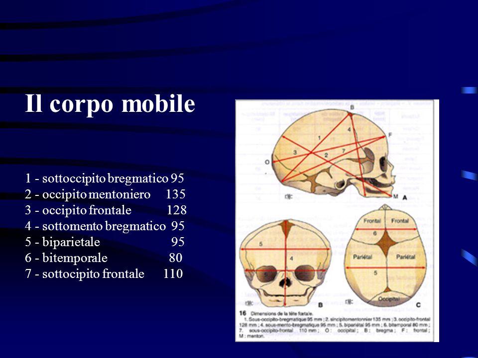 Il corpo mobile 1 - sottoccipito bregmatico 95 2 - occipito mentoniero 135 3 - occipito frontale 128 4 - sottomento bregmatico 95 5 - biparietale 95 6