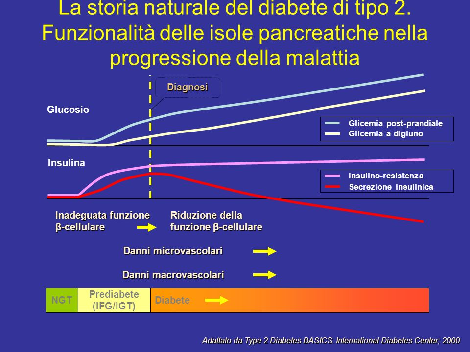 Adattato da Type 2 Diabetes BASICS. International Diabetes Center; 2000 La storia naturale del diabete di tipo 2. Funzionalità delle isole pancreatich