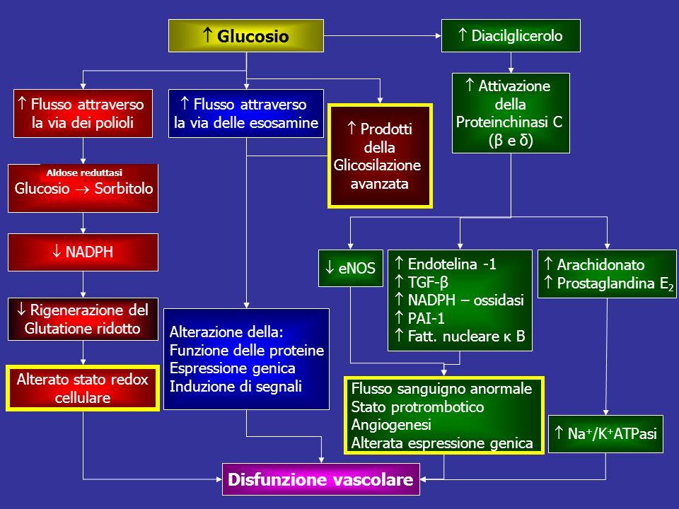 Glucosio Flusso attraverso la via dei polioli Flusso attraverso la via delle esosamine Prodotti della Glicosilazione avanzata Diacilglicerolo Attivazi