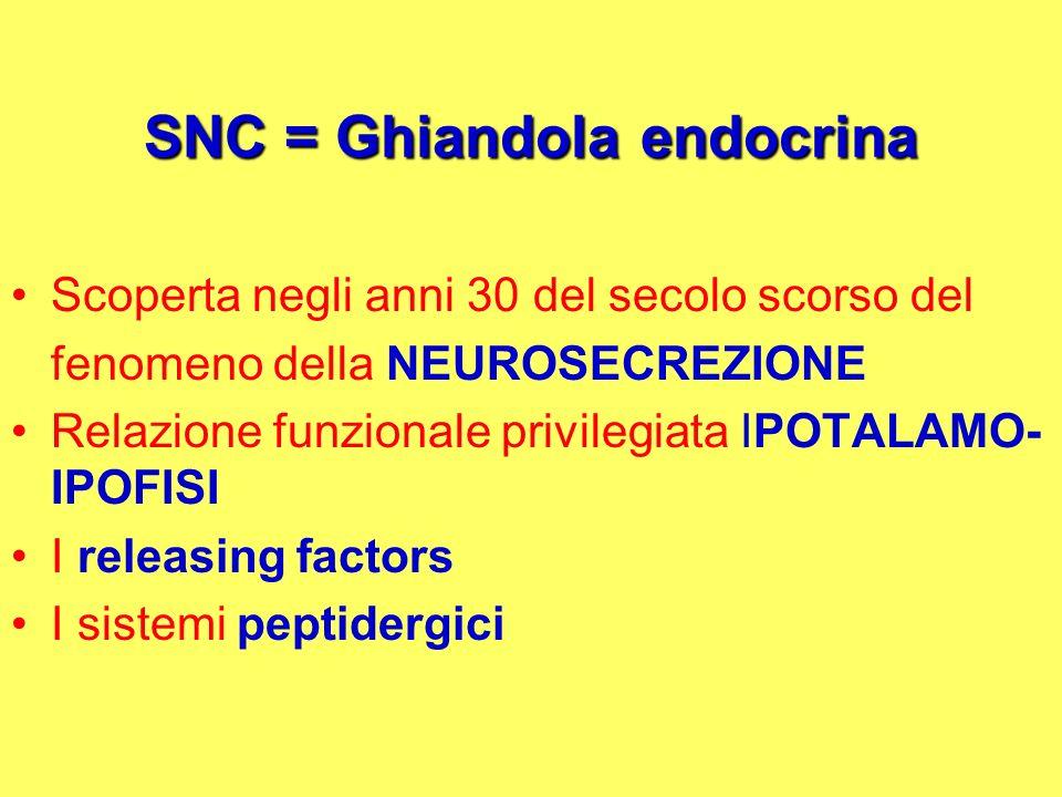 SNC = Ghiandola endocrina Scoperta negli anni 30 del secolo scorso del fenomeno della NEUROSECREZIONE Relazione funzionale privilegiata IPOTALAMO- IPO