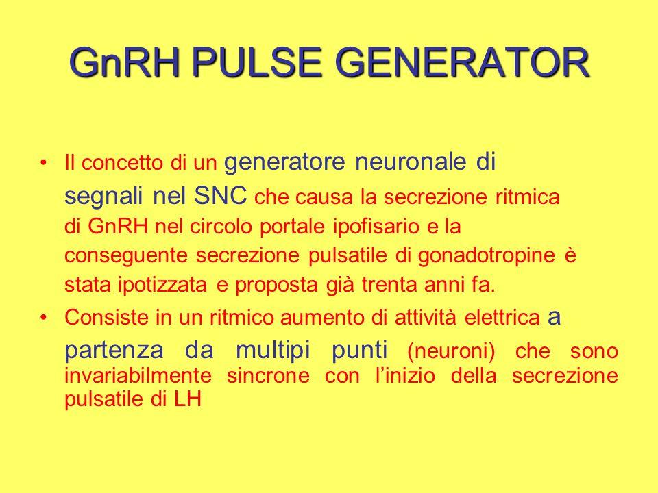 GnRH PULSE GENERATOR Il concetto di un generatore neuronale di segnali nel SNC che causa la secrezione ritmica di GnRH nel circolo portale ipofisario