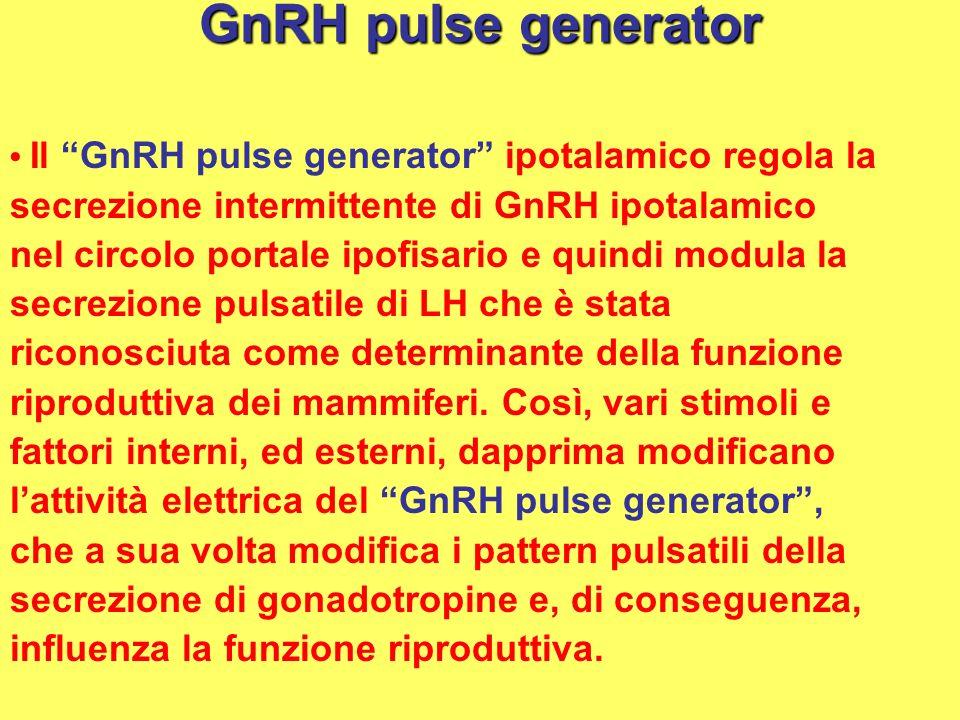 GnRH pulse generator Il GnRH pulse generator ipotalamico regola la secrezione intermittente di GnRH ipotalamico nel circolo portale ipofisario e quind