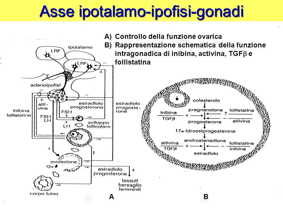 Asse ipotalamo-ipofisi-gonadi A)Controllo della funzione ovarica B)Rappresentazione schematica della funzione intragonadica di inibina, activina, TGF