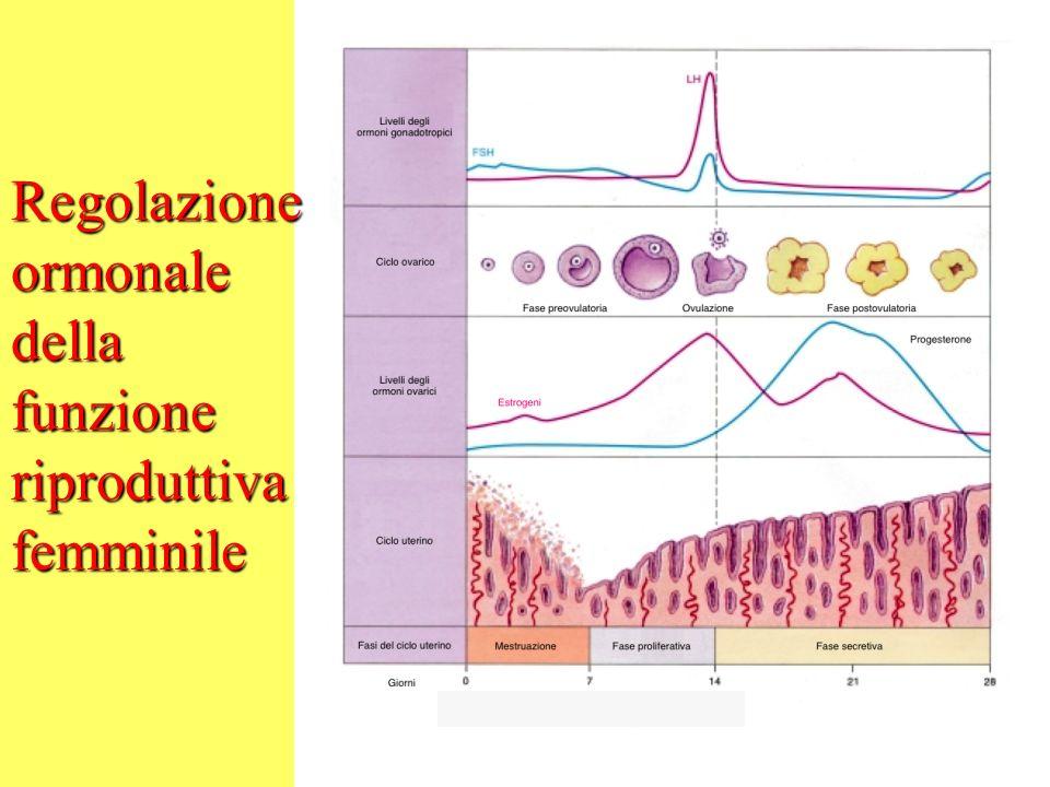 Regolazione ormonale della funzione riproduttiva femminile