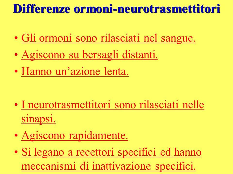 Differenze ormoni-neurotrasmettitori Gli ormoni sono rilasciati nel sangue. Agiscono su bersagli distanti. Hanno unazione lenta. I neurotrasmettitori