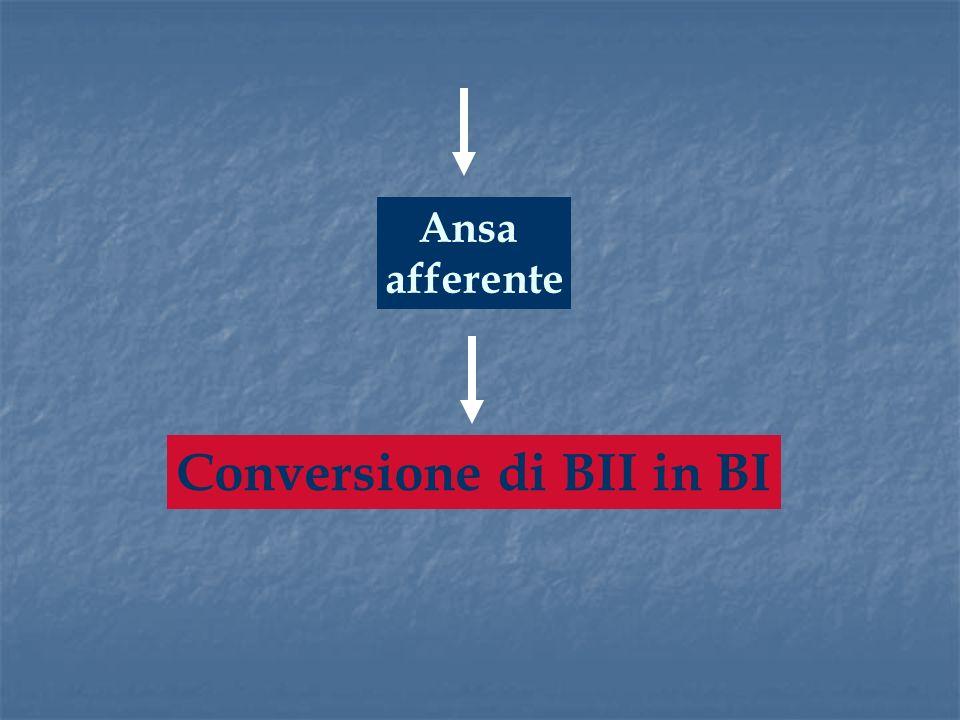 Ansa afferente Conversione di BII in BI