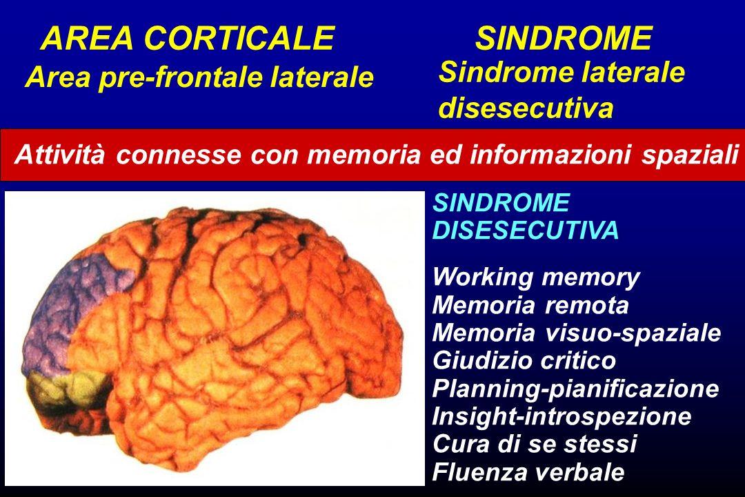 Attività connesse con memoria ed informazioni spaziali Area pre-frontale laterale Sindrome laterale disesecutiva AREA CORTICALE SINDROME SINDROME DISE