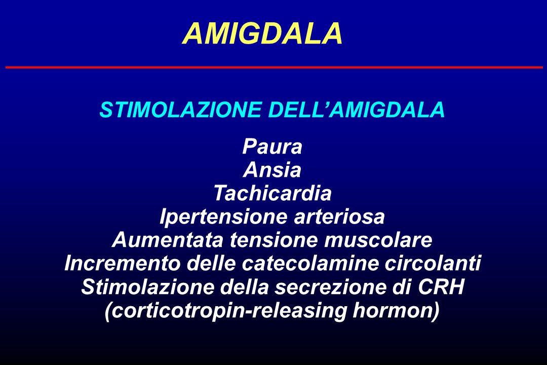 AMIGDALA STIMOLAZIONE DELLAMIGDALA Paura Ansia Tachicardia Ipertensione arteriosa Aumentata tensione muscolare Incremento delle catecolamine circolant