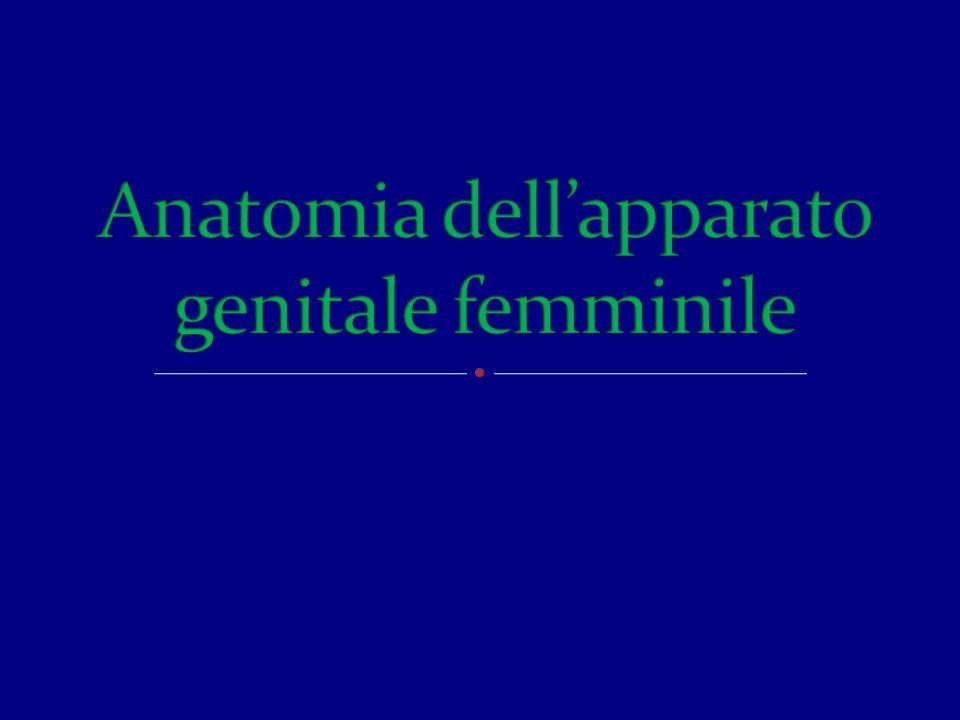 Apparati di sospensione e sostegno : contengono, fissano e sorreggono gli organi genitali; Pelvi ossea o piccolo bacino, Strutture di sospensione (sistema fasciale e legamentoso) Strutture muscolo aponeurotiche del pavimento pelvico.
