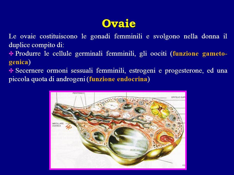 Le ovaie costituiscono le gonadi femminili e svolgono nella donna il duplice compito di: Produrre le cellule germinali femminili, gli oociti (funzione