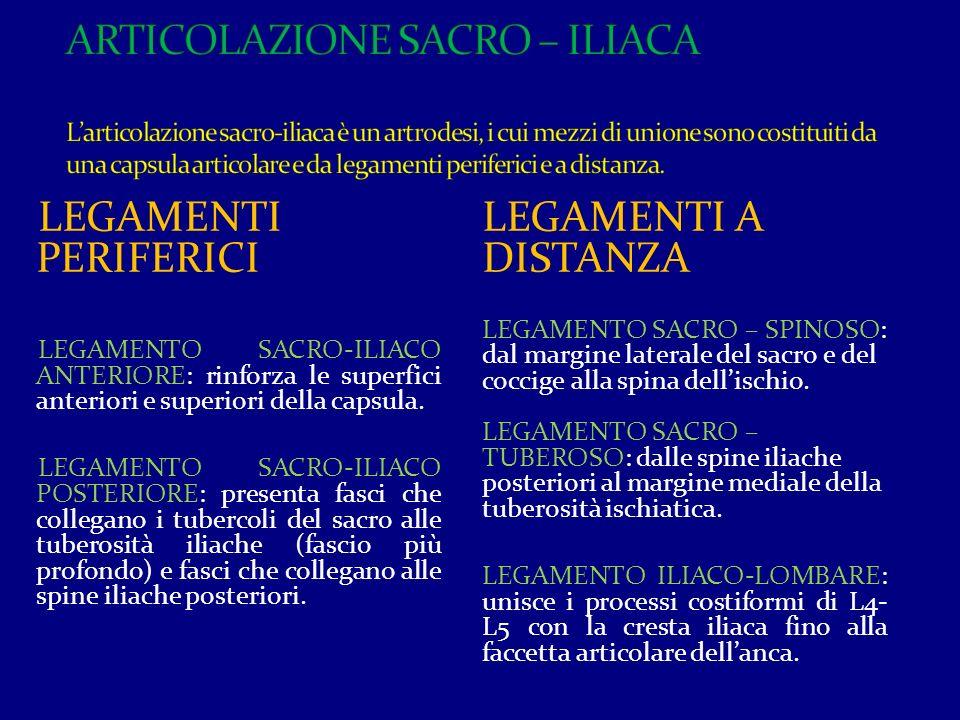 I LEGAMENTI SACRO-TUBEROSO E SACRO-SPINOSO CHIUDONO LE DUE INCISURE ISCHIATICHE DELIMITANDO IL GRANDE E IL PICCOLO FORAME ISCHIATICO.