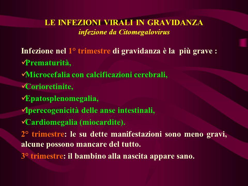LE INFEZIONI VIRALI IN GRAVIDANZA infezione da Citomegalovirus Infezione nel 1° trimestre di gravidanza è la più grave : Prematurità, Microcefalia con
