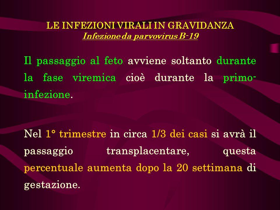 LE INFEZIONI VIRALI IN GRAVIDANZA Infezione da parvovirus B-19 Il passaggio al feto avviene soltanto durante la fase viremica cioè durante la primo- i