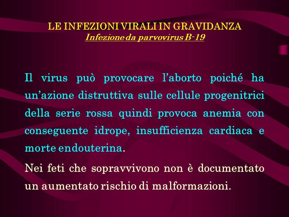 LE INFEZIONI VIRALI IN GRAVIDANZA Infezione da parvovirus B-19 Il virus può provocare laborto poiché ha unazione distruttiva sulle cellule progenitric