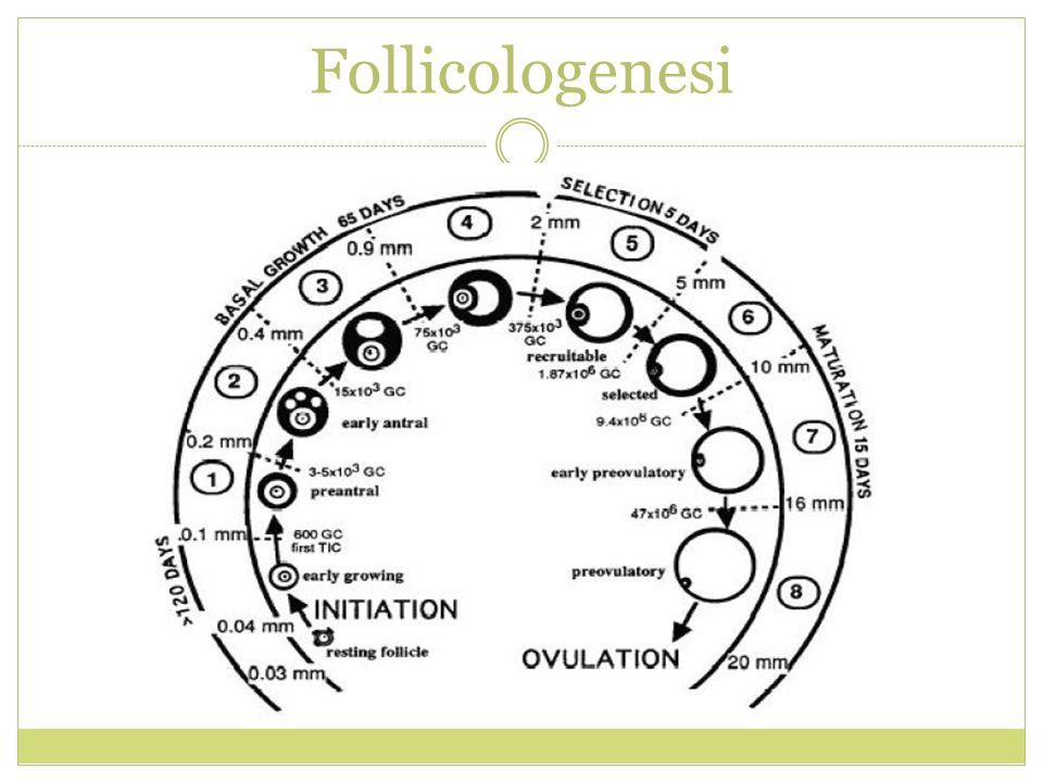 Follicologenesi