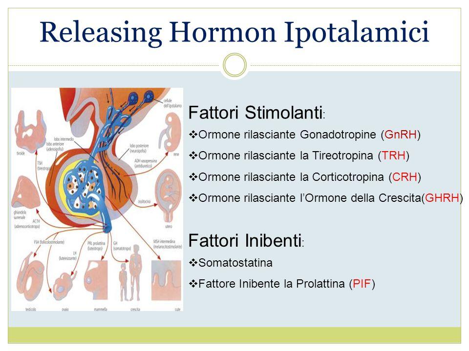 Releasing Hormon Ipotalamici Fattori Stimolanti : Ormone rilasciante Gonadotropine (GnRH) Ormone rilasciante la Tireotropina (TRH) Ormone rilasciante
