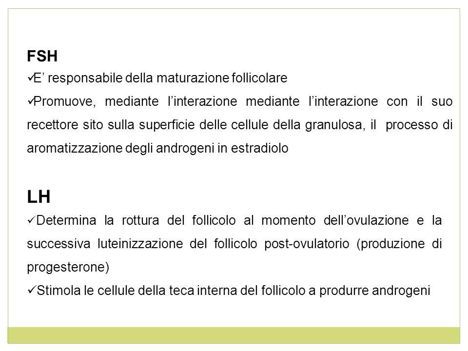 Funzione Follicologenetica Funzione Steroidogenetica Reclutamento Selezione Dominanza (e atresia dei follicoli più piccoli) Ovulazione: scoppio del follicolo maturo con espulsione dellovocita Formazione del Corpo Luteo Luteolisi (Corpo Albicante) Estrogeni (C 18) Androgeni (C 19) Progestinici (C21) Ciclo Ovarico