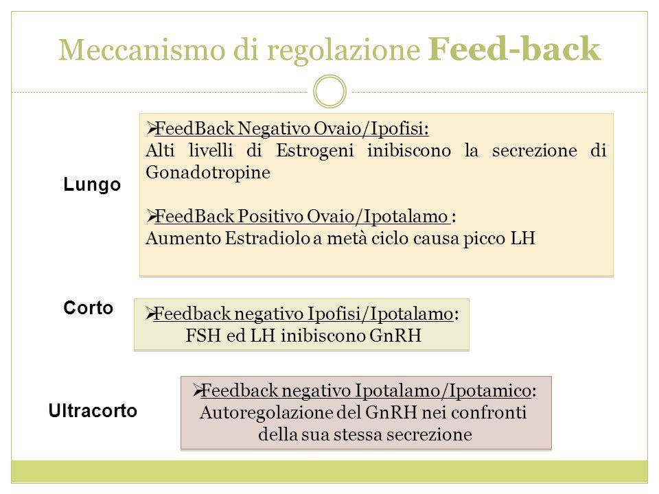 Meccanismo di regolazione Feed-back Feedback negativo Ipofisi/Ipotalamo: FSH ed LH inibiscono GnRH Feedback negativo Ipofisi/Ipotalamo: FSH ed LH inib
