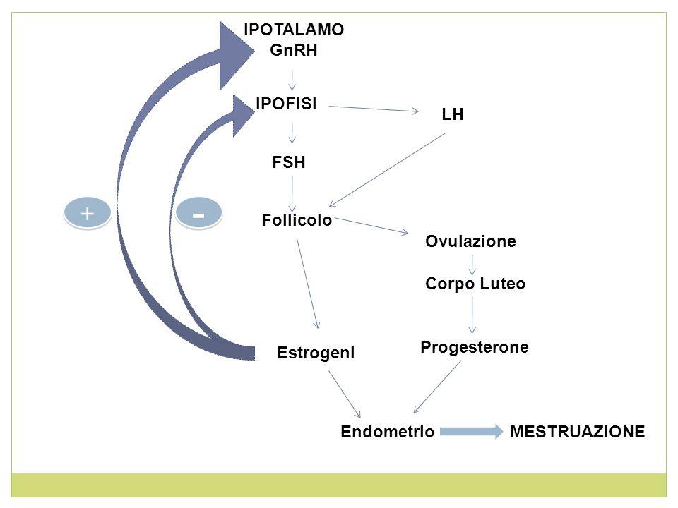 IPOTALAMO GnRH IPOFISI FSH LH Follicolo Estrogeni Ovulazione Endometrio Corpo Luteo Progesterone MESTRUAZIONE - - + +
