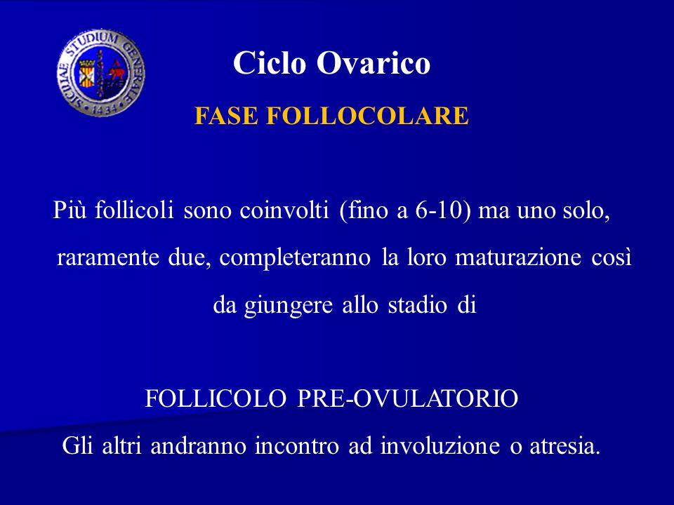 Ciclo Ovarico FASE FOLLOCOLARE Più follicoli sono coinvolti (fino a 6-10) ma uno solo, raramente due, completeranno la loro maturazione così da giunge