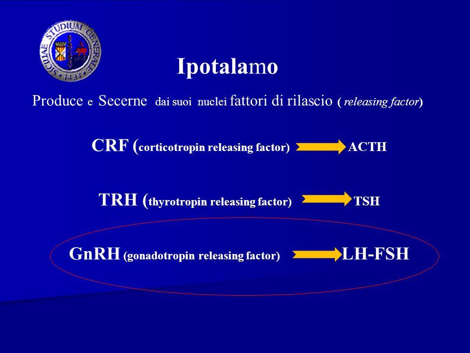 Ipotalamo Produce e Secerne dai suoi nuclei fattori di rilascio ( releasing factor) CRF ( corticotropin releasing factor) ACTH TRH ( thyrotropin relea