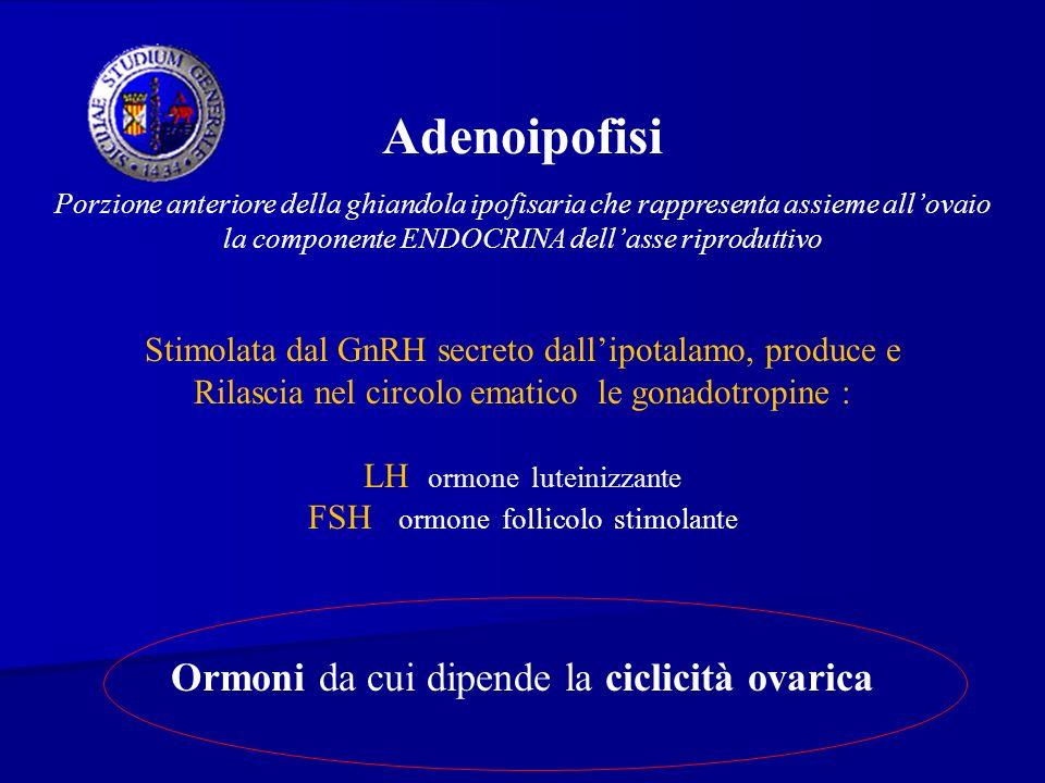 Adenoipofisi Porzione anteriore della ghiandola ipofisaria che rappresenta assieme allovaio la componente ENDOCRINA dellasse riproduttivo Stimolata da