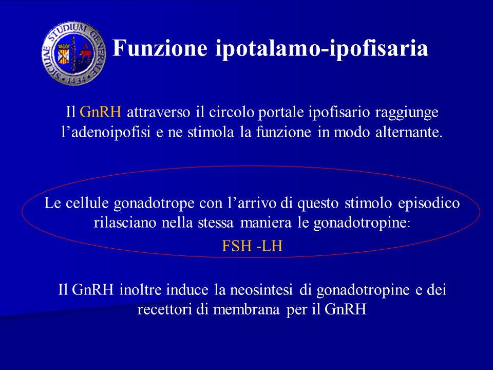 Funzione ipotalamo-ipofisaria Il GnRH attraverso il circolo portale ipofisario raggiunge ladenoipofisi e ne stimola la funzione in modo alternante. Le