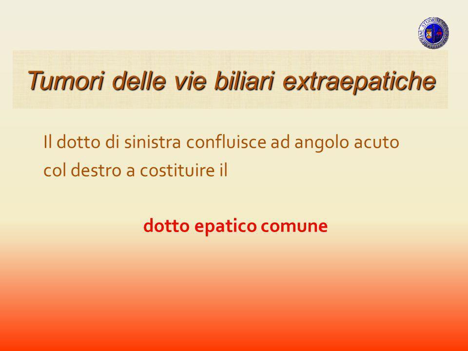 CARCINOMI ANATOMIA PATOLOGICA TRATTO PROSSIMALE TRATTO INTERMEDIO TRATTO DISTALE Tumori della VBP
