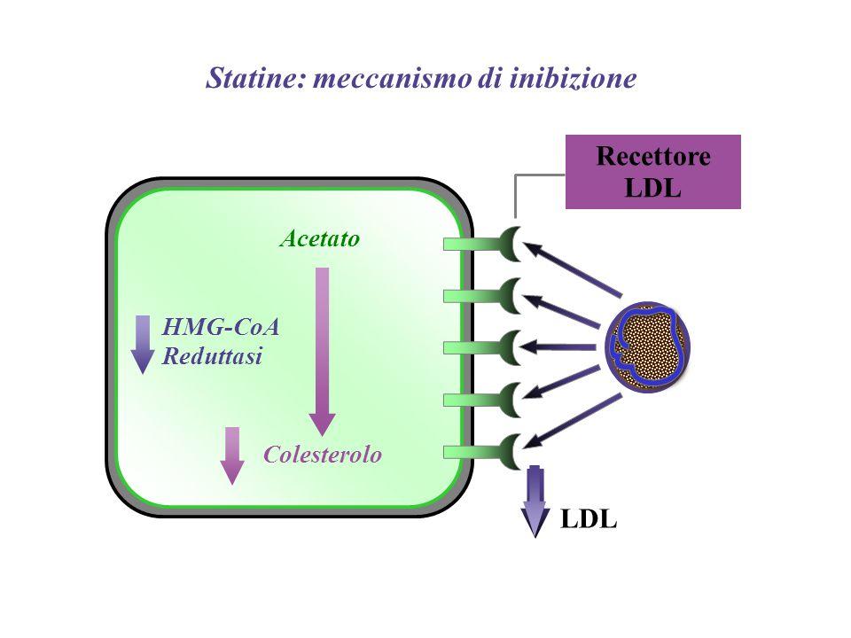 Recettore LDL Acetato LDL HMG-CoA Reduttasi Colesterolo Statine: meccanismo di inibizione