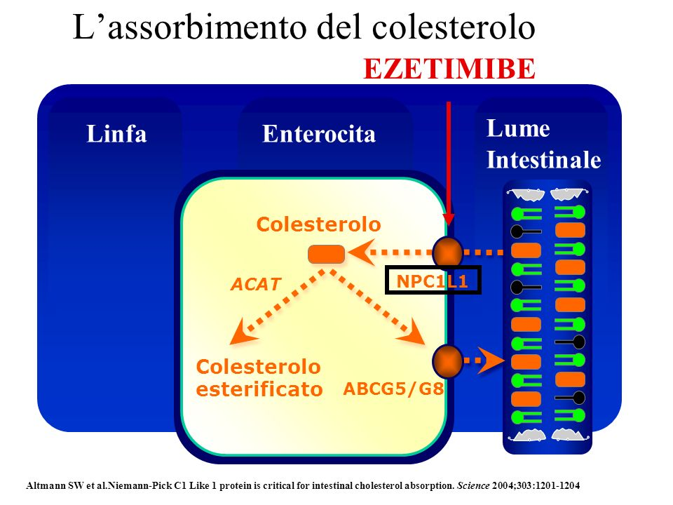 Lassorbimento del colesterolo Colesterolo NPC1L1 Colesterolo esterificato ABCG5/G8 ACAT LinfaEnterocita Lume Intestinale Altmann SW et al.Niemann-Pick
