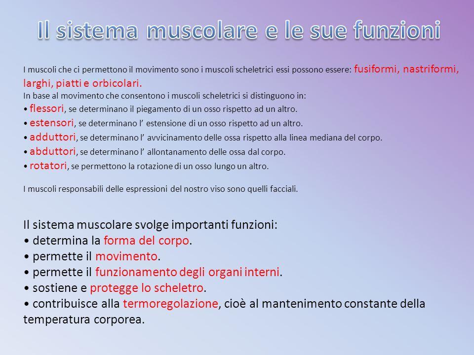 I muscoli che ci permettono il movimento sono i muscoli scheletrici essi possono essere: fusiformi, nastriformi, larghi, piatti e orbicolari.