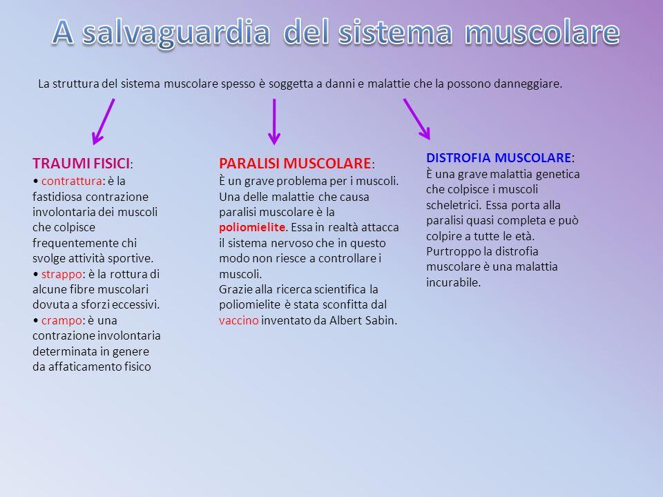 La struttura del sistema muscolare spesso è soggetta a danni e malattie che la possono danneggiare.