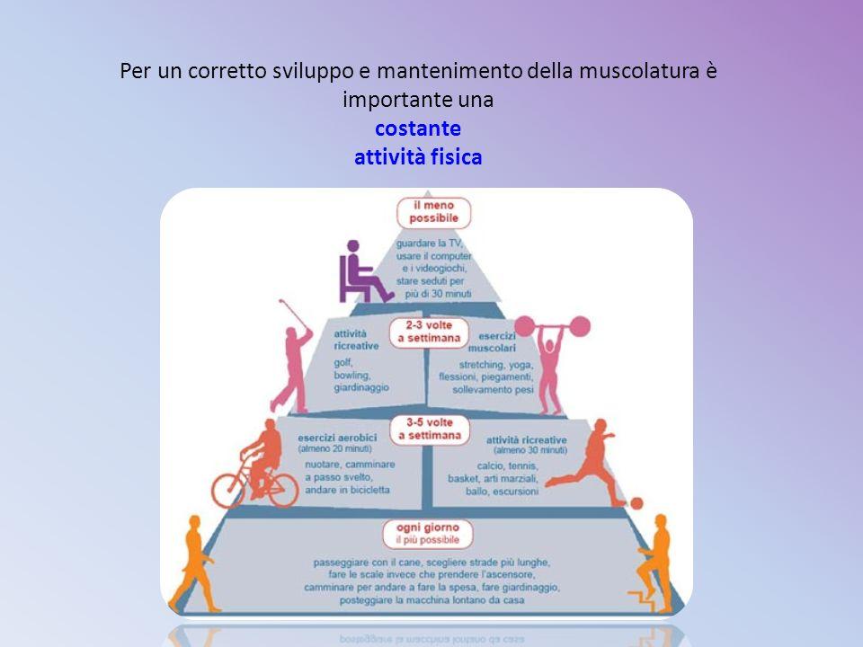 Per un corretto sviluppo e mantenimento della muscolatura è importante una costante attività fisica
