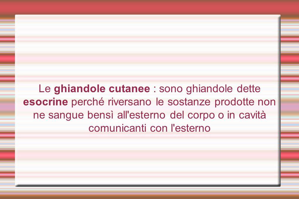 Le ghiandole cutanee : sono ghiandole dette esocrine perché riversano le sostanze prodotte non ne sangue bensì all'esterno del corpo o in cavità comun