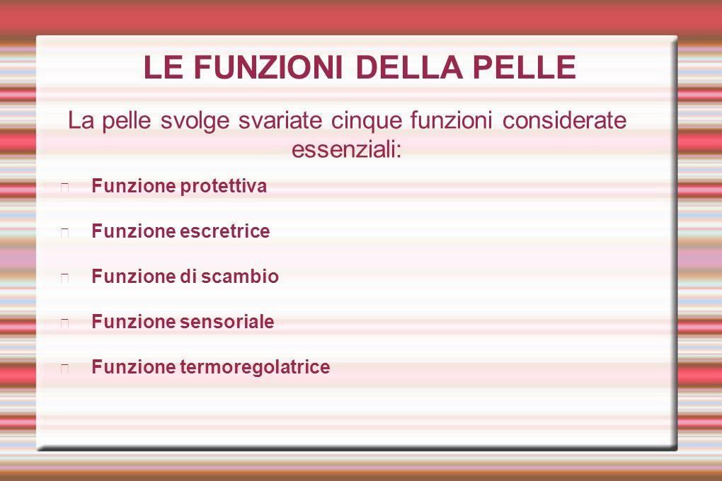 LE FUNZIONI DELLA PELLE La pelle svolge svariate cinque funzioni considerate essenziali: Funzione protettiva Funzione escretrice Funzione di scambio F