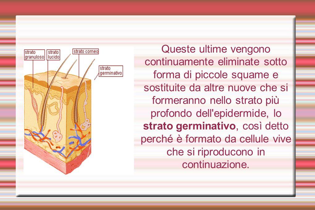 Nello strato ancora più profondo a contatto con il derma, sono presenti delle cellule, i melanociti, che contengono la melanina, una proteina di colore scuro responsabile dell abbronzatura e del colore della pelle.
