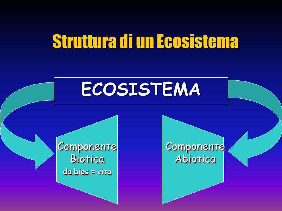 Struttura di un Ecosistema ECOSISTEMA Componente Biotica da bios = vita Componente Biotica da bios = vita Componente Abiotica