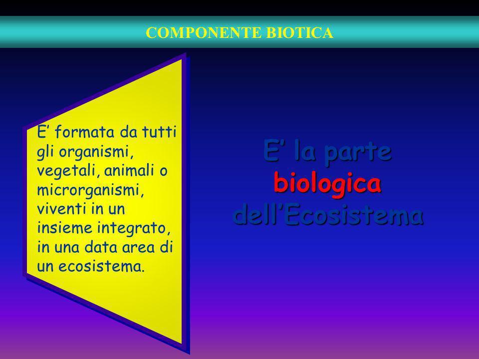 COMPONENTE BIOTICA E la parte biologica dellEcosistema E formata da tutti gli organismi, vegetali, animali o microrganismi, viventi in un insieme inte