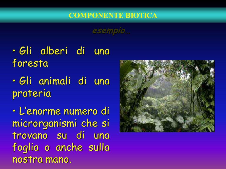 esempio… Gli alberi di una foresta Gli alberi di una foresta Gli animali di una prateria Gli animali di una prateria Lenorme numero di microrganismi c