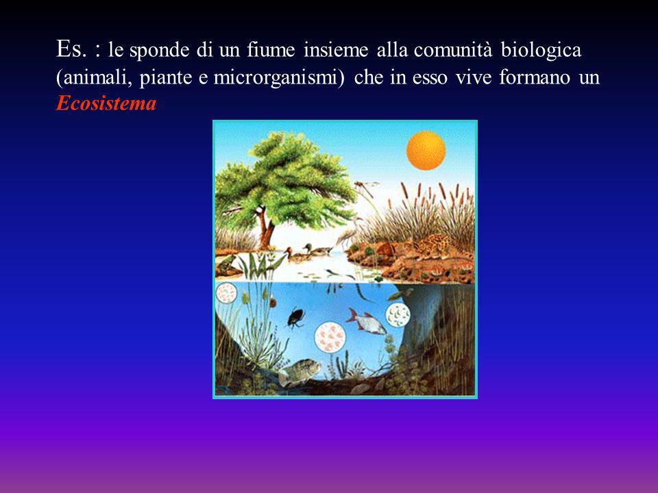 Es. : le sponde di un fiume insieme alla comunità biologica (animali, piante e microrganismi) che in esso vive formano un Ecosistema