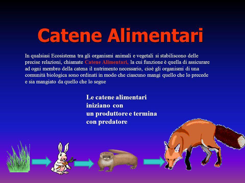 Catene Alimentari In qualsiasi Ecosistema tra gli organismi animali e vegetali si stabiliscono delle precise relazioni, chiamate Catene Alimentari, la