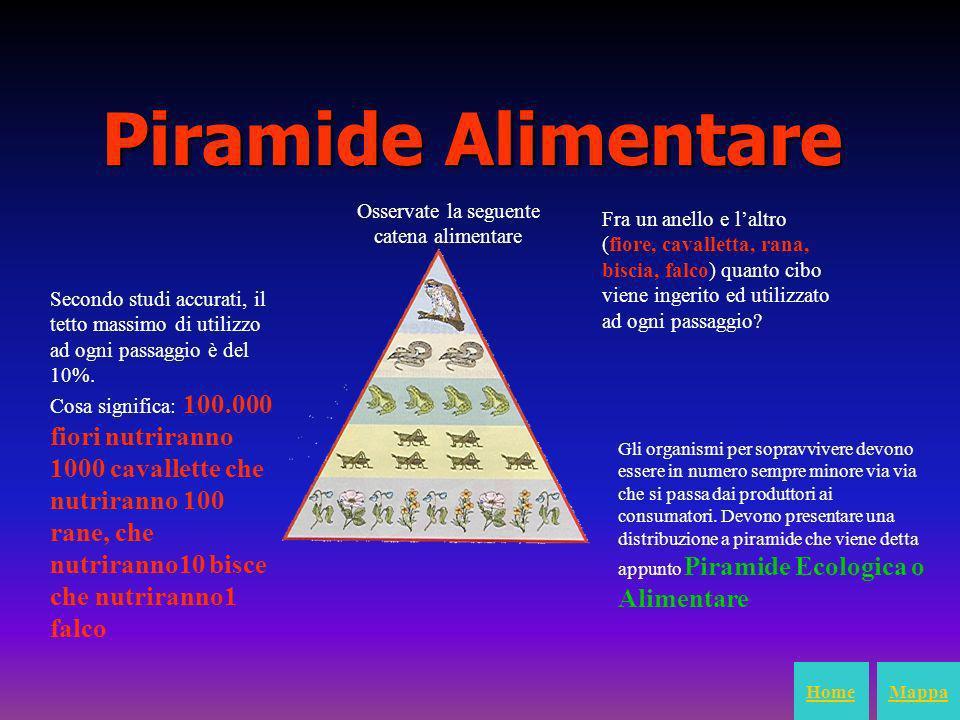 Piramide Alimentare Osservate la seguente catena alimentare Fra un anello e laltro (fiore, cavalletta, rana, biscia, falco) quanto cibo viene ingerito