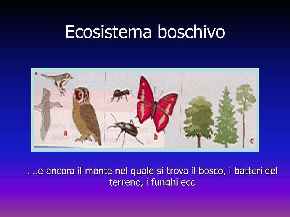 Ecosistema boschivo ….e ancora il monte nel quale si trova il bosco, i batteri del terreno, i funghi ecc Ecosistema boschivo