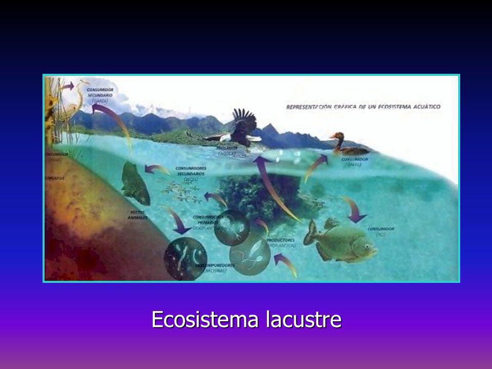 Ecosistema acquatico Ecosistema lacustre