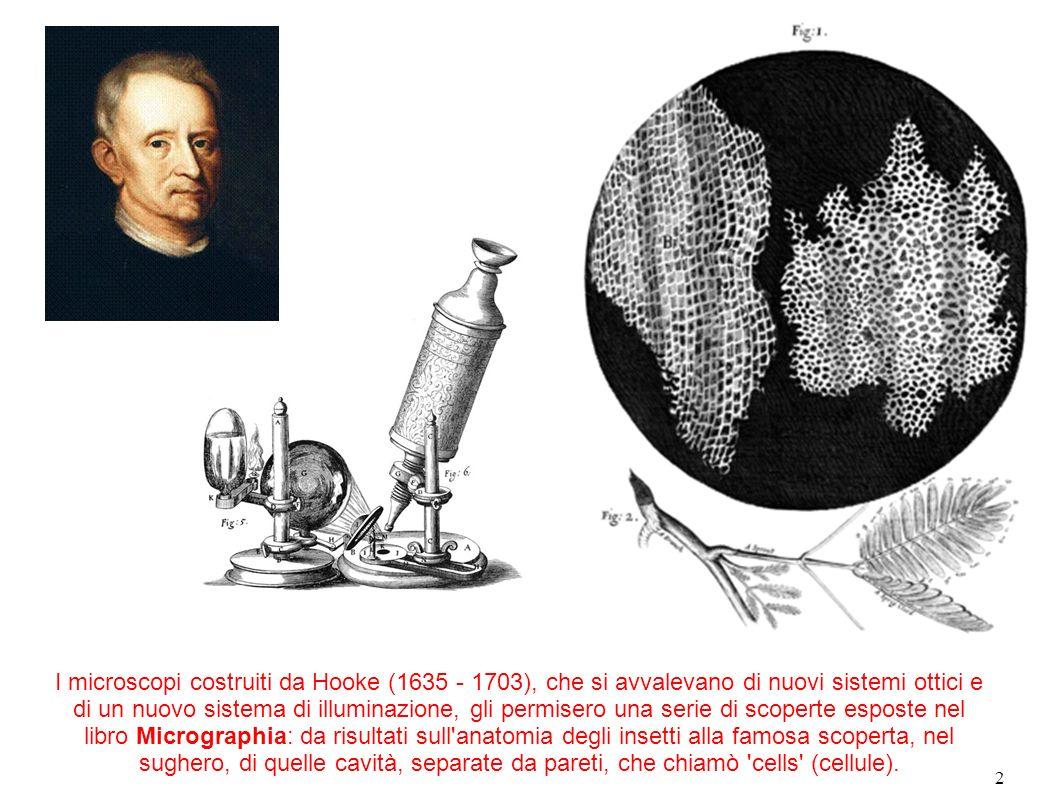 2 I microscopi costruiti da Hooke (1635 - 1703), che si avvalevano di nuovi sistemi ottici e di un nuovo sistema di illuminazione, gli permisero una s