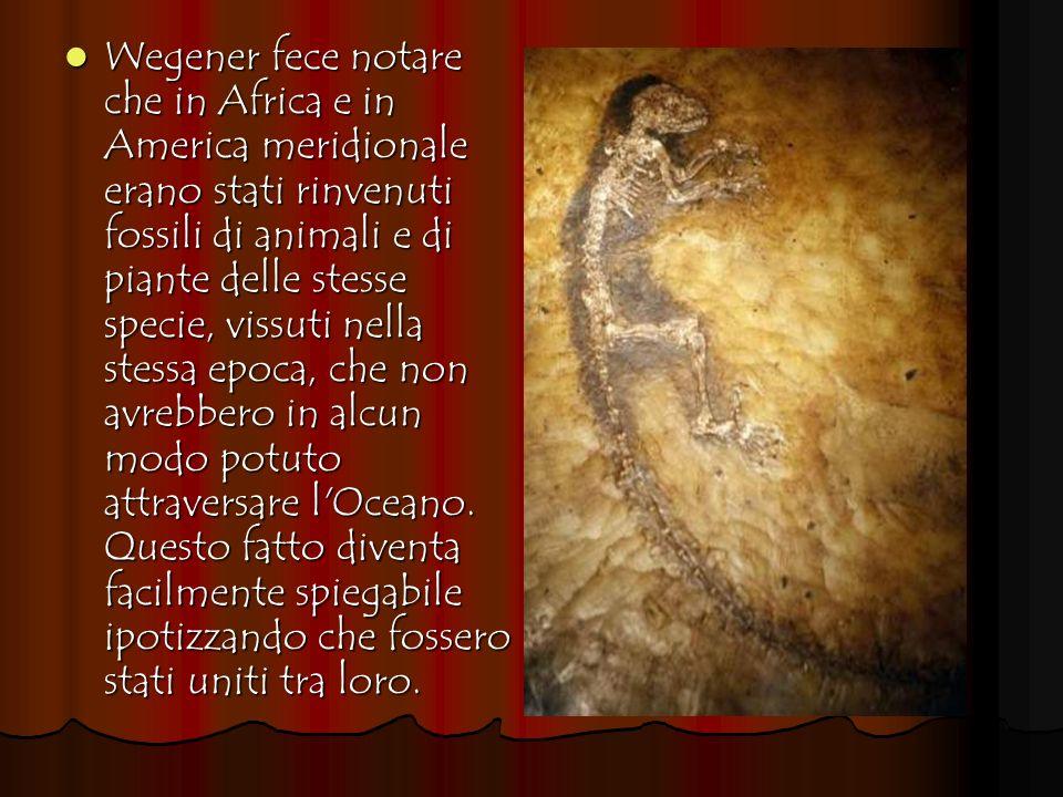 Wegener fece notare che in Africa e in America meridionale erano stati rinvenuti fossili di animali e di piante delle stesse specie, vissuti nella ste